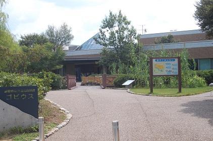 島根県立 宍道湖自然館 ゴビウス