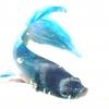 r____aquarium10