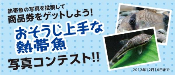 おそうじ上手な熱帯魚の写真コンテスト開催!!