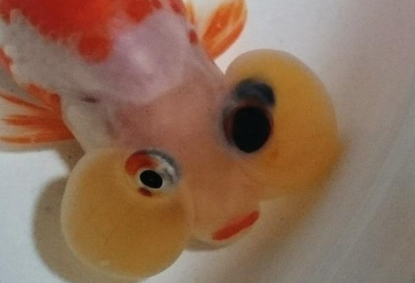 「目が3つ」  の キャリコ水泡