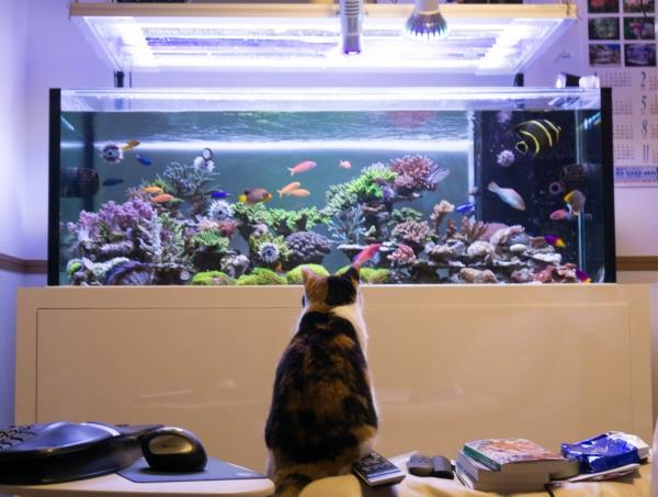猫は魚が好き