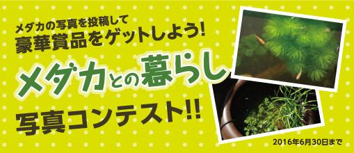 第7回写真コンテスト<メダカとの暮らし>>