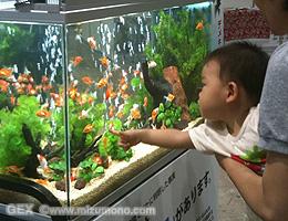 GEXお魚飼育で子供の想像力アップ!