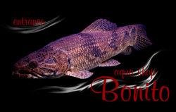 aqua shop BONITO(アクアショップ ボニート)