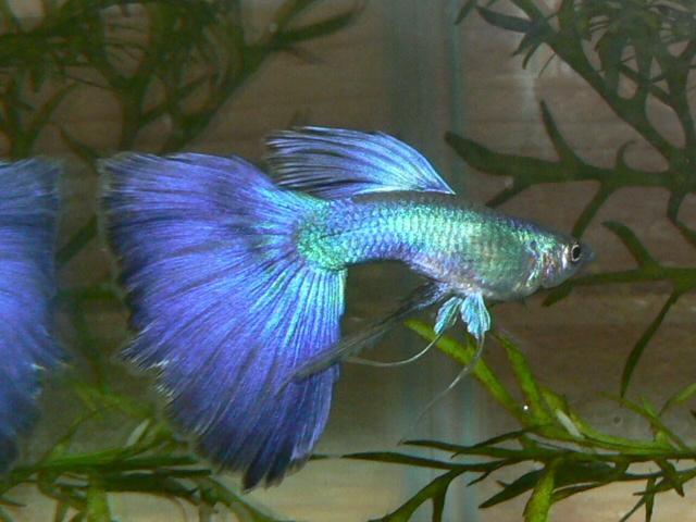 新城熱帯魚