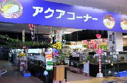 Aqua Proshop マナウス新習志野店