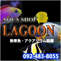 AQUA SHOP LAGOON