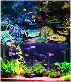 かつら熱帯魚 海水魚センター