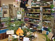 PICK UP 熱帯魚ショップ:金魚専門店 伊藤養魚場