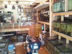 観賞魚・熱帯魚販売 小島商会