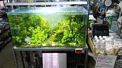 熱帯魚 金魚 水草の専門店 F&P 白石