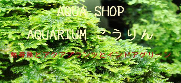 アクアリューウム紅鱗