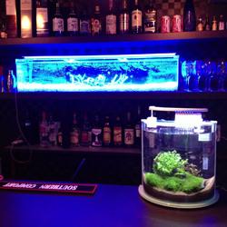 Bar Aqua Ring(バーアクアリング)