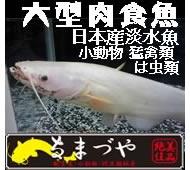 ペットプラザなまづや(コーナン岸和田ベイサイド店ペットプラザ)