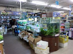 Aqua Proshop マナウス草加店