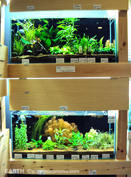 aquariumshop EARTH店内