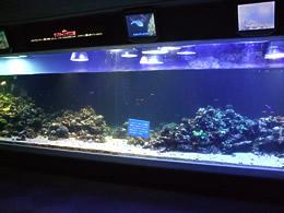 珊瑚の再生プロジェクト水槽