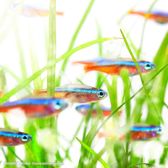 aquphotolabo15041.jpg