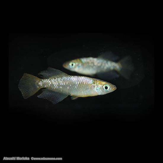 aquphotolabo18041.jpg
