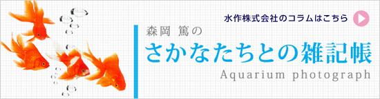aquphotolabo_suisaku.jpg
