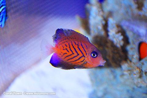 marineaq150901.jpg