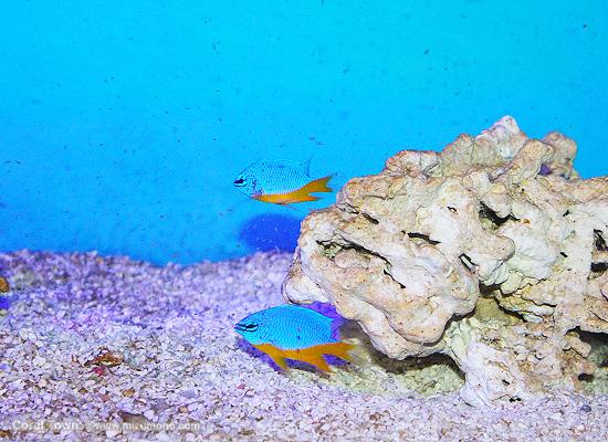 marineaq151001.jpg