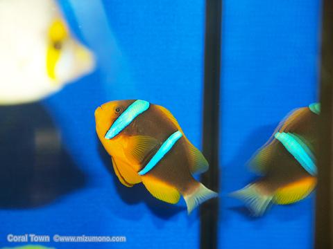 marineaq20011.jpg