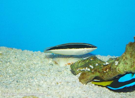 marineaq20121.jpg