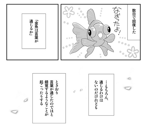 dwkingyo201808_072.jpg