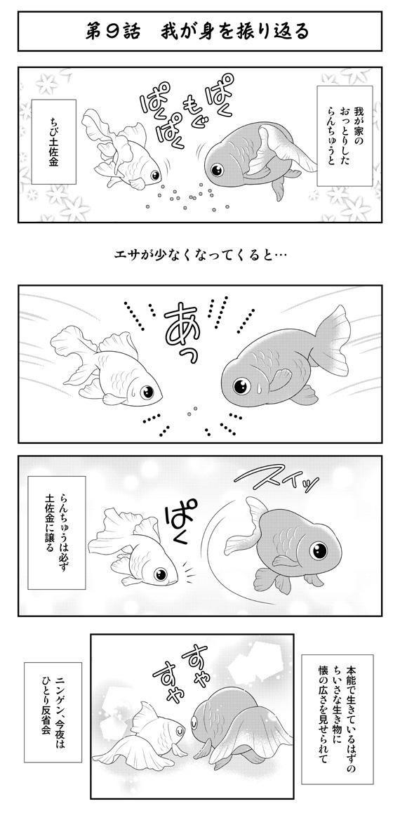 dwkingyo201810_091.jpg
