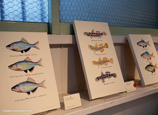 魚譜画家・長嶋祐成氏「夏の魚展」