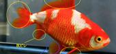 知っておきたい!観賞魚の健康法