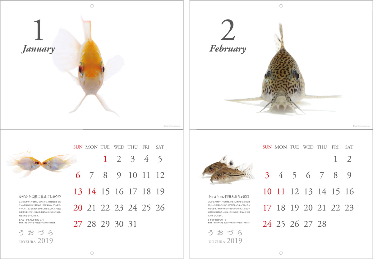 calendar2019_a03.jpg