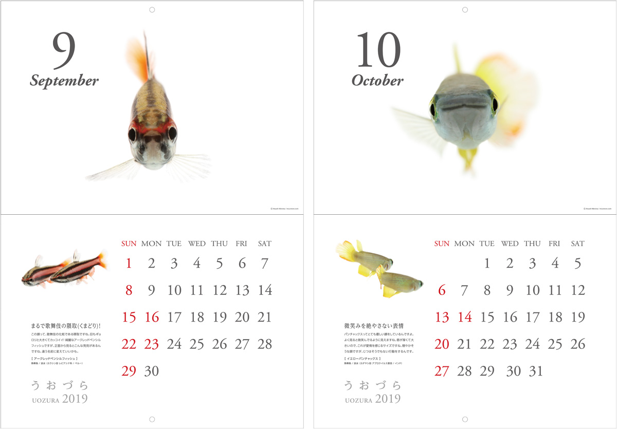 calendar2019_a07.jpg