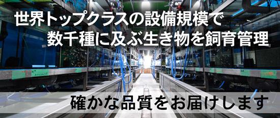 product_kamihata170811.jpg