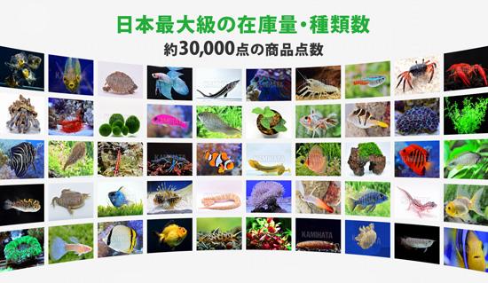 product_kamihata170814.jpg