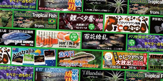 product_kamihata170817.jpg