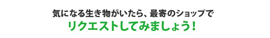product_kamihata170818.jpg