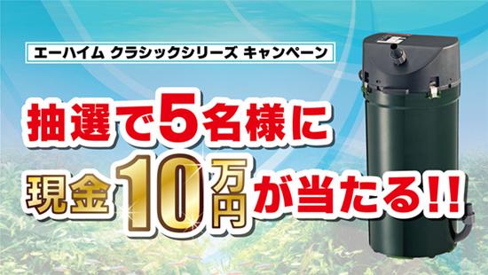 product_kamihata181101.jpg