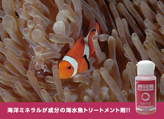 松橋研究所「白点キラー 海水魚トリートメント用」