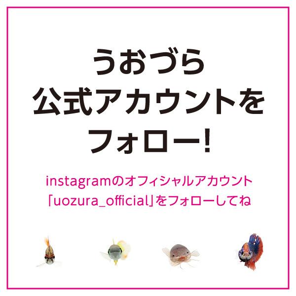 uozura_cp201903.jpg