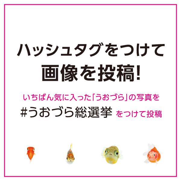 uozura_cp201904.jpg
