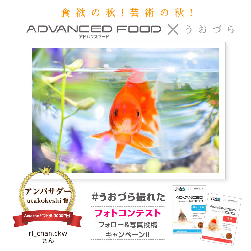 uozura_cp20201130a3.jpg