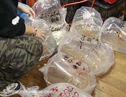 2013日本観賞魚フェア