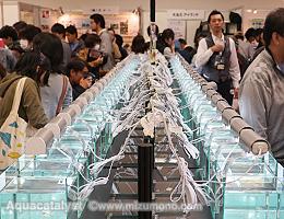 第32回日本観賞魚フェア