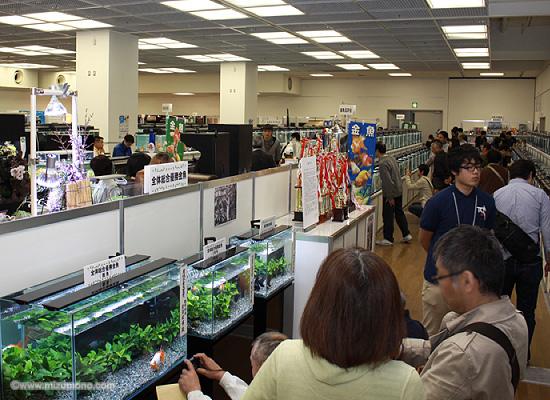 第34回日本観賞魚フェア