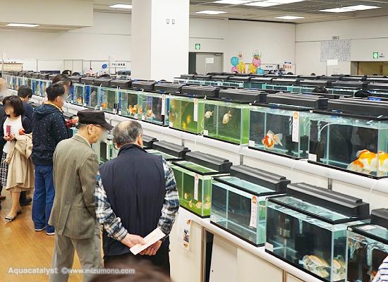 2017年 第35回 日本観賞魚フェア