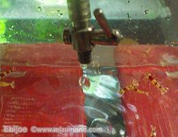 shrimp141203.jpg